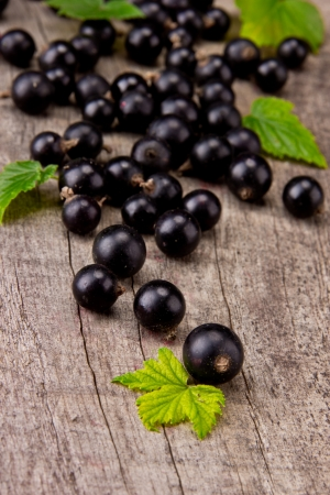 Fresh black currant photo