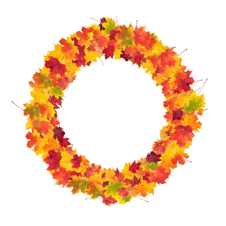 Autumn bunch of maple leaves isolated on white background photo