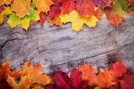 autumn grunge: Maple leaves on wooden surface
