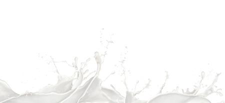 Wavy Milk splashes, isolated on white background photo