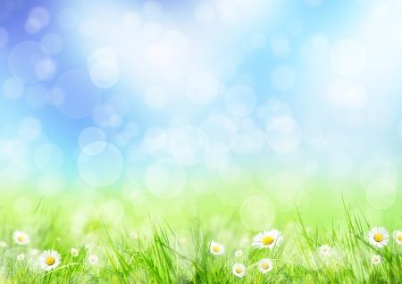 봄 초원 스톡 콘텐츠