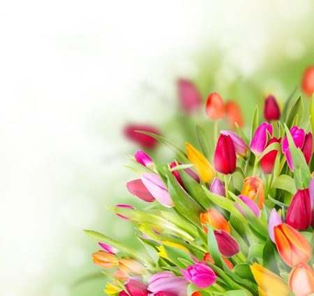 floral arrangements:  Beautiful tulips bouquet with free space for text Stock Photo