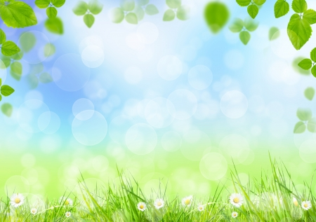 spring background: Spring meadow with green leaves  Stock Photo