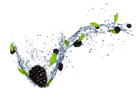 Fresh blackberries in water splash, isolated on white background photo