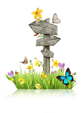 Signpost in meadow with butterflies, concept of spring Stock Photo - 17591683