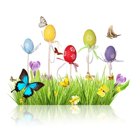 Easter colored eggs in grass, isolated on white background Stock Photo - 17591713