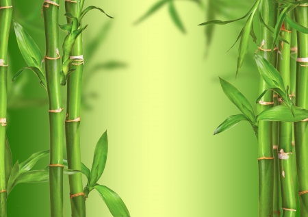 bamboo therapy: Spa still life with bamboo sprouts, free space for text