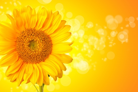 Sunflower blossom detail with abstract shiny background photo
