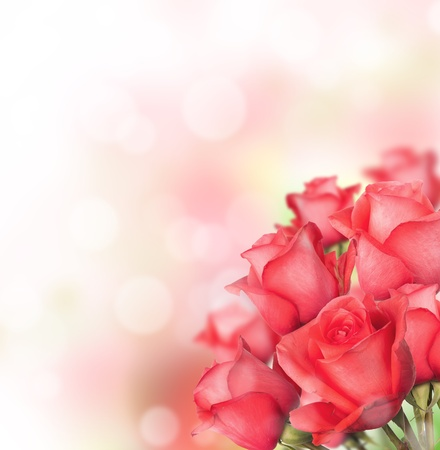wild rose: Red roses bouquet with free space for text Stock Photo