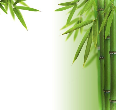 Bamboo sprouts with free space for text photo