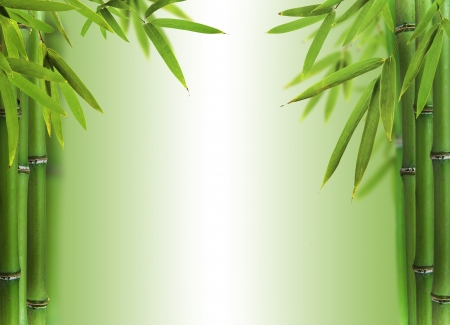 wellness background: Bamboo sprouts with free space for text Stock Photo