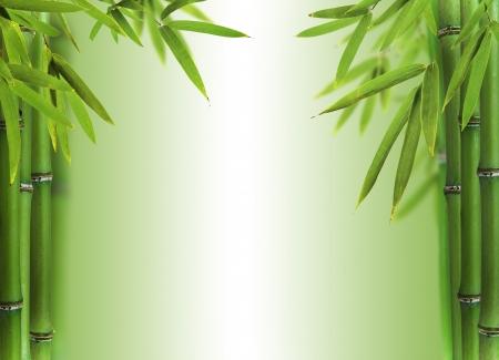 japones bambu: Brotes de bambú con espacio libre para el texto Foto de archivo