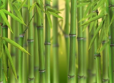 japones bambu: Bosque brotes de bambú