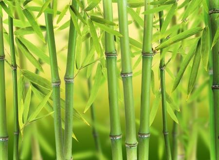 guadua: Bosque brotes de bamb�
