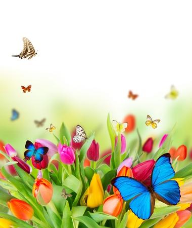 sol radiante: Hermosas flores de primavera con mariposas Foto de archivo