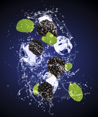Isolated shot of fresh blackberries with ice and water Stock Photo - 19555326