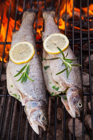 Delicious grilled trouts on fire photo