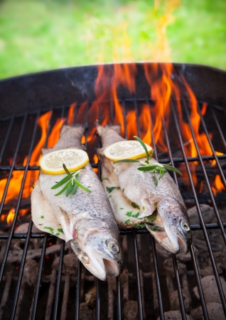 grilled fish: Delicious grilled trouts on fire Stock Photo