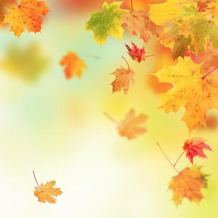 Herfst achtergrond Stockfoto - 32690731