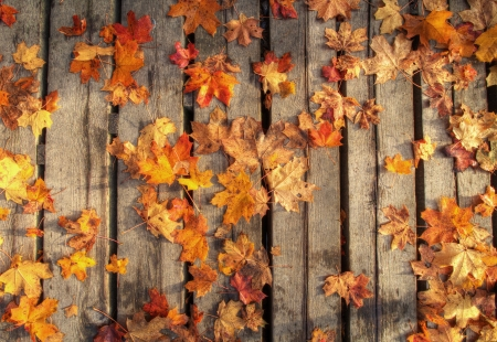 Colored autumn leaves on wooden planks photo
