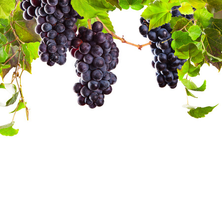 vine border: Pieces of red wine grapes on white background Stock Photo