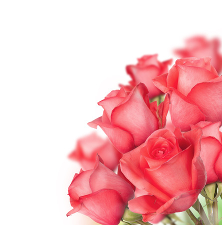 compleanno: Isolato bouquet di rose su fondo bianco