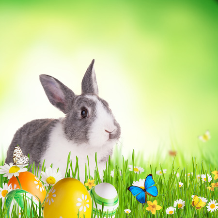Cute rabbit in grass with coloured eggs, Free space for text photo