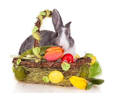 Studio shot of domestic rabbit in basket on white background photo