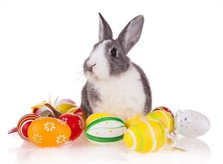 Studio shot of domestic rabbit with easter eggs on white background photo