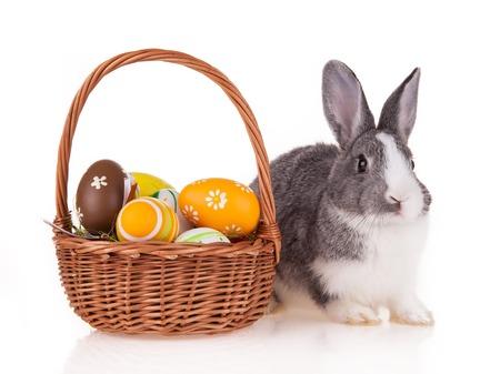 Studio shot of domestic rabbit on white background photo
