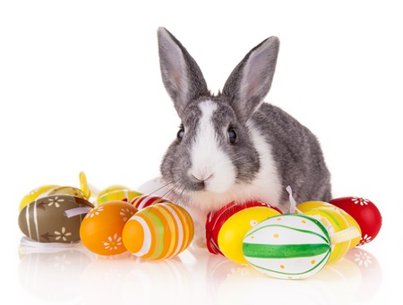 Studio shot of domestic rabbit with easter eggs on white background Stock Photo