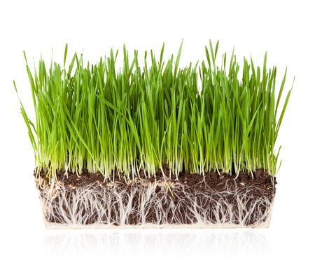 grass roots: Grass on white Stock Photo
