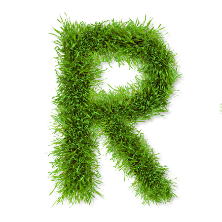 Fresh grass letter  R  isolated on white background photo