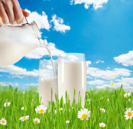 Concept of fresh milk pouring into glass in grass with blooming chamomiles  Blue sky with clouds on background photo