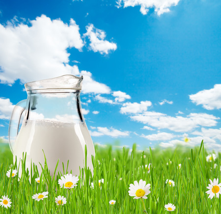 Milk jug full of milk in grass with blooming chamomiles  Blue sky with clouds on background photo
