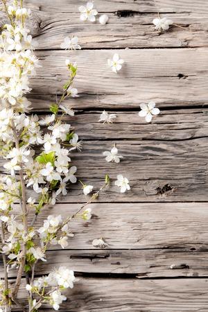 Spring blossoms Zdjęcie Seryjne