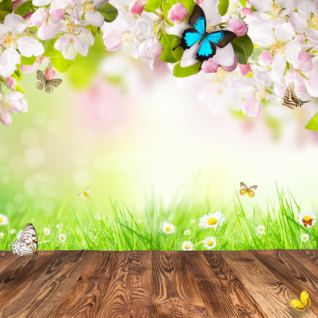 Spring apple blossoms above wooden planks photo