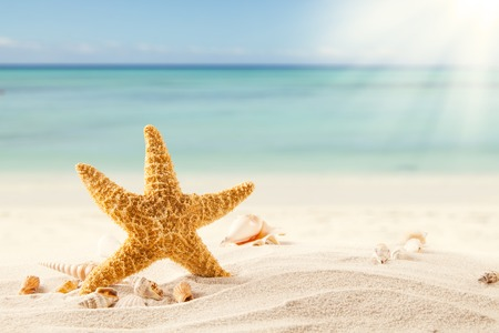 Summer concept with sandy beach, shells and starfish  photo