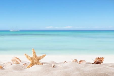 summer: Conceito do verão com praia de areia, conchas e estrelas do mar Imagens