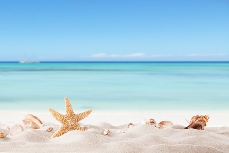 Summer concept with sandy beach, shells and starfish