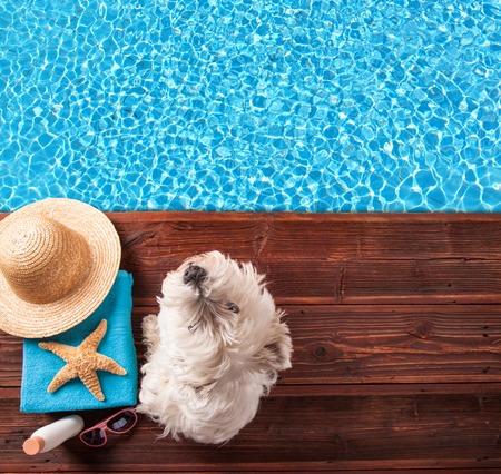 Het concept van de zomer met hond en accessoires op hout Stockfoto