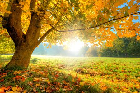 秋の風景の乾燥した葉とサンシャイン