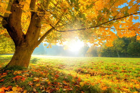 Autumn scenery with dry leaves and sunshine