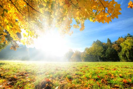 Herfst landschap met droge bladeren en zonneschijn