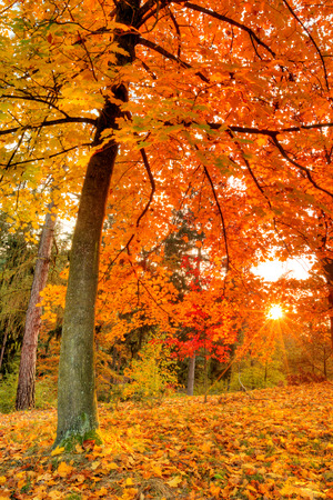 Autumn scenery with dry leaves and sunshine photo