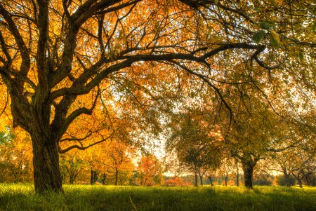 oak trees: Autumn scenery with trees in sunshine Stock Photo