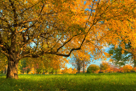 Paisaje de otoño con hojas secas y el sol Foto de archivo - 31906781