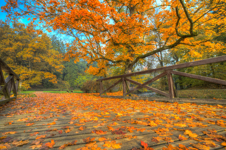 quiet scenery: Autumn scenery with dry leaves and sunshine
