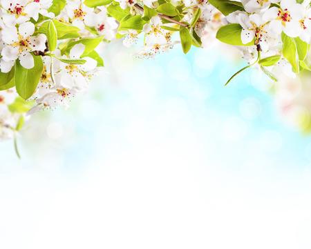 春の花の白い背景上。テキスト用の空き容量