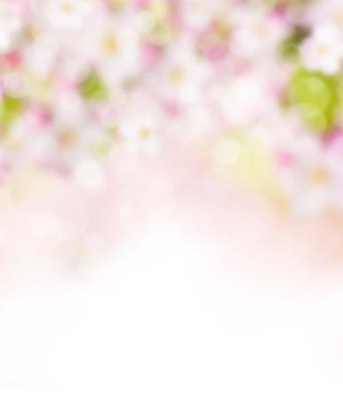 スポット ライトとぼやけて春の抽象的な背景 写真素材